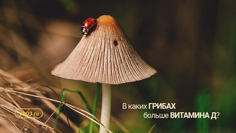 Витамин Д в грибах
